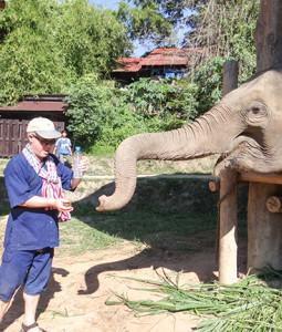 Feeding herb balls to retired elephant