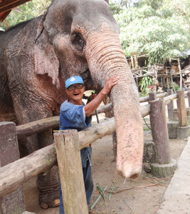 Old elephant with his mahout